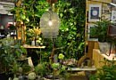 New Ideas for Floristry Sector at IPM ESSEN (22-25/1)