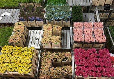 Royal Floraholland calls on growers to supply fewer flowers and plants measures coronavirus floral industry sector emergency flower shops florists floral art prices Mother's Day Fleur Créatif magazine floral news
